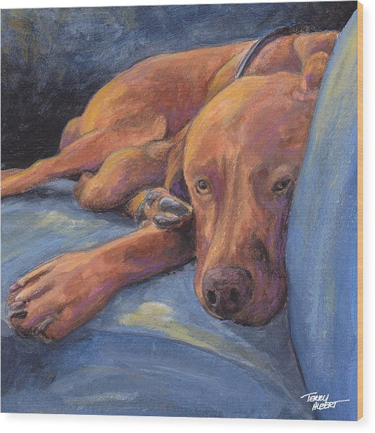 Vizsla Napping Wood Print by Terry Albert
