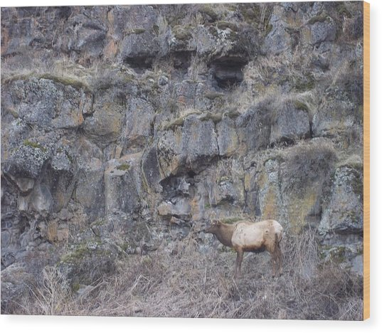 Volcanic Formation And Elk Wood Print by Angela Stout