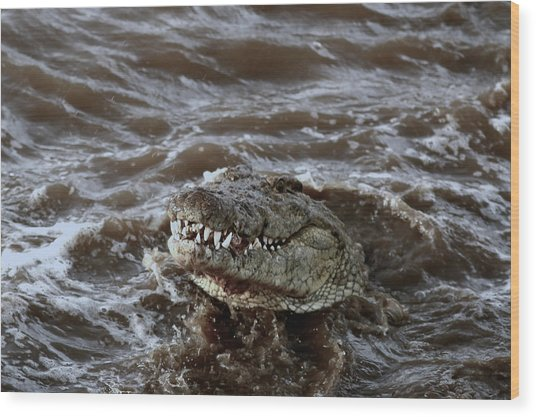 Voracious Crocodile In Water Wood Print