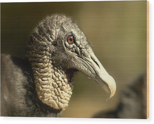 vulture II Wood Print