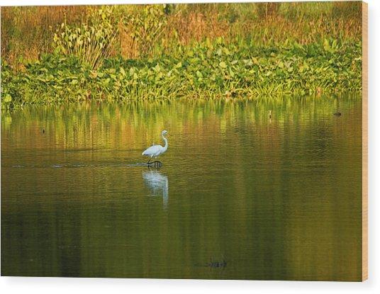Wading Egret Wood Print
