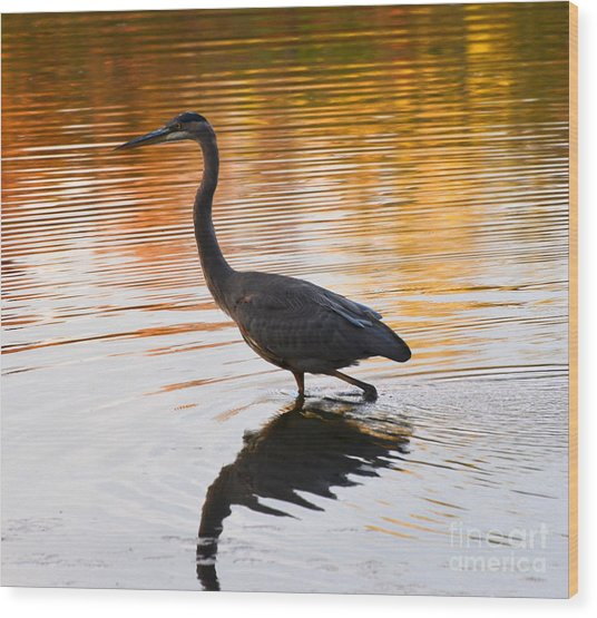 Wading For You Wood Print