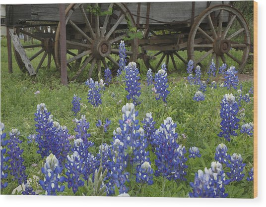 Wagon With Bluebonnets Wood Print