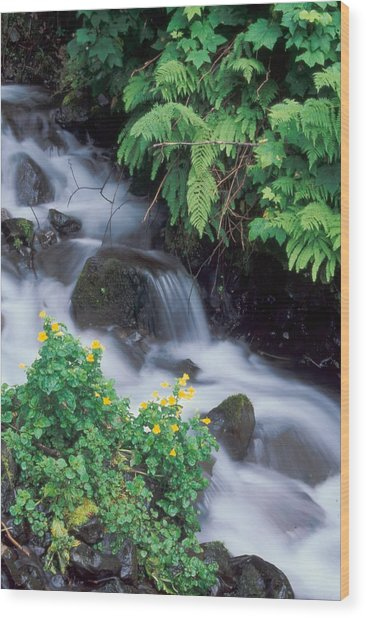 Wahkeena Creek Spring Wood Print