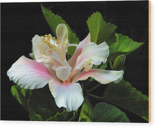 Waitangi White Hibiscus Wood Print