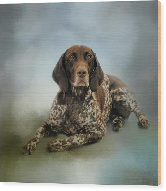 Waiting For A Cue - German Shorthaired Pointer Wood Print