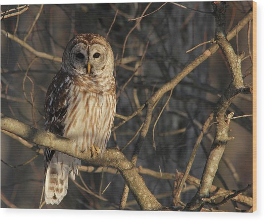 Waiting For Supper Wood Print