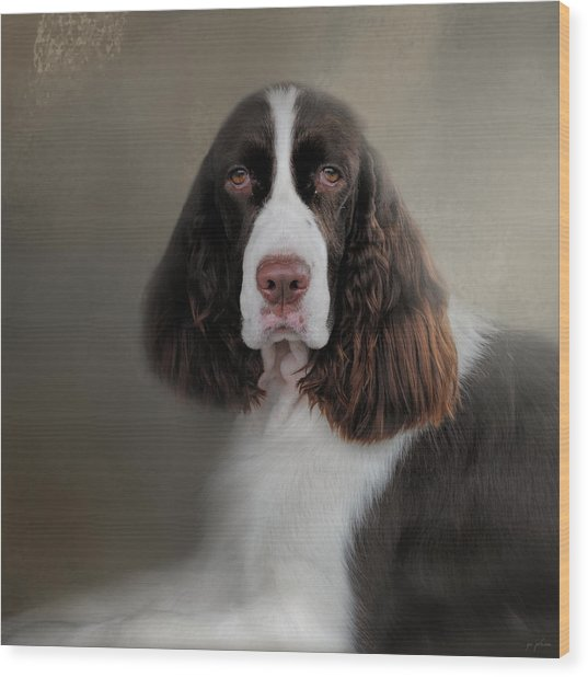 Waiting Patiently - English Springer Spaniel Wood Print
