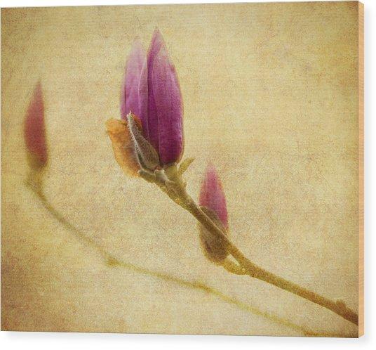 Waiting To Bloom Wood Print