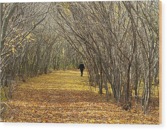 Walking A Golden Road Wood Print