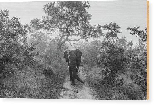 Walking Giant Wood Print by Jaco Marx