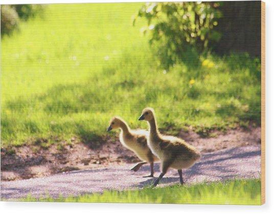 Walking In Park Wood Print