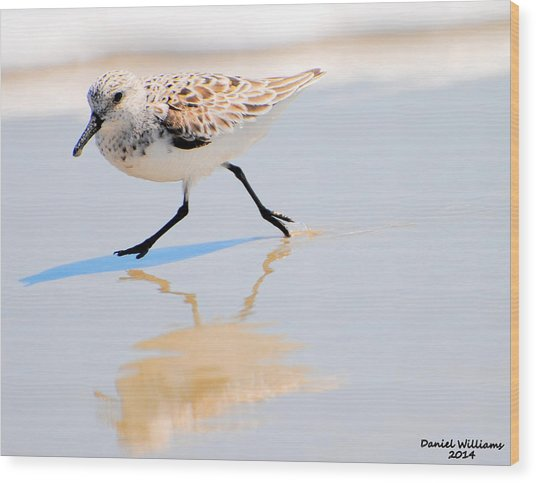 Walking Shorebird  Wood Print