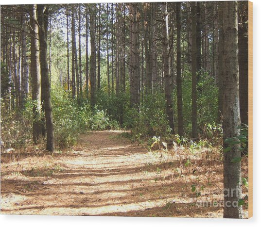 Walking Trail Wood Print by Margaret McDermott