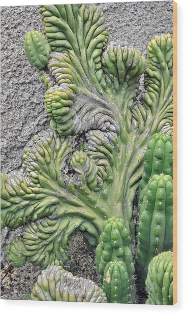 Wall Cactus Wood Print by Misty Stach