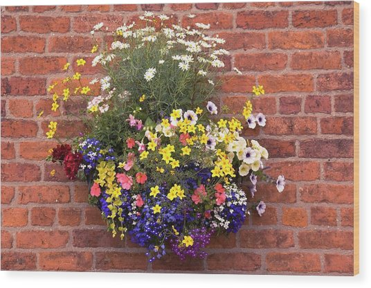 Wall Mounted Planter Wood Print