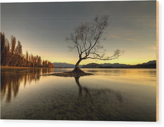Wanaka - That Tree 1 Wood Print