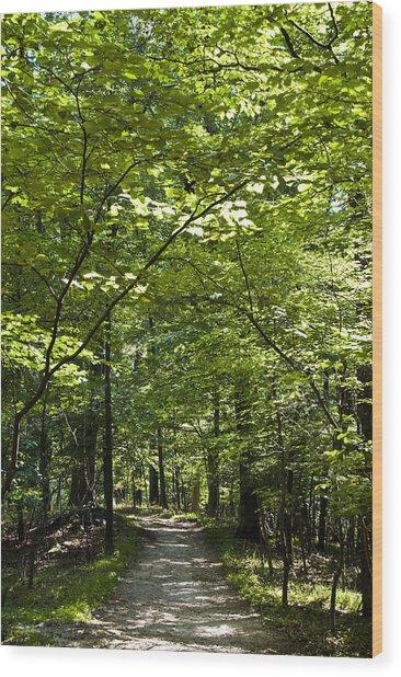 Wander Like A Drifter Wood Print