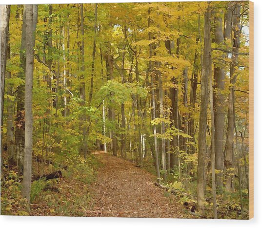 Wandering Trail 6 Wood Print by BackHome Images
