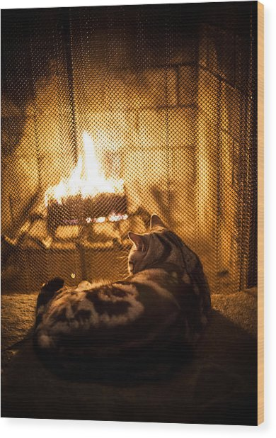 Warm Kitty Wood Print