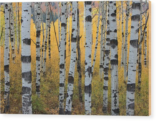 Wasatch Aspens Wood Print