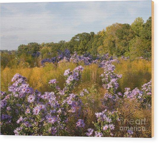 Washington Fall Asters  Wood Print