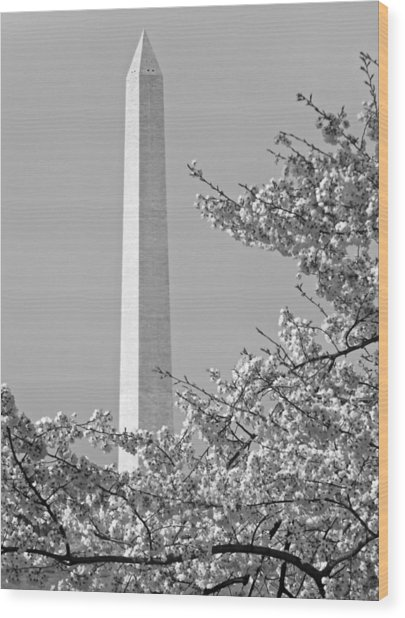 Washington Monument Amidst The Cherry Blossoms Wood Print