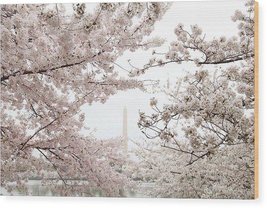 Washington Monument - Cherry Blossoms - Washington Dc - 011343 Wood Print by DC Photographer