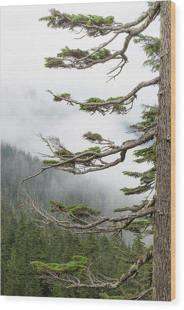 Washington, Mount Rainier National Park Wood Print by Jaynes Gallery