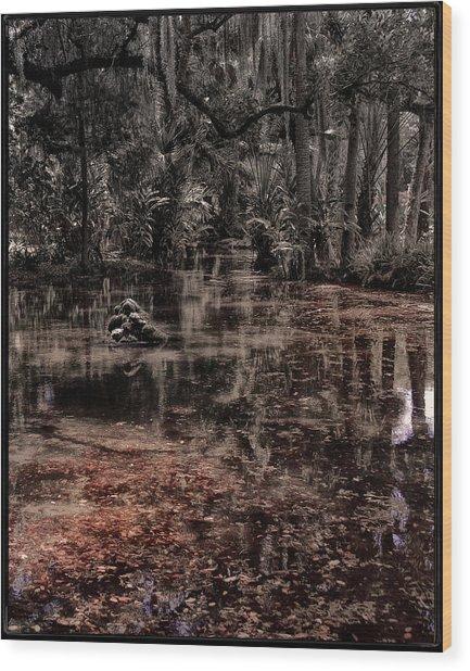 Washington Oaks Wood Print