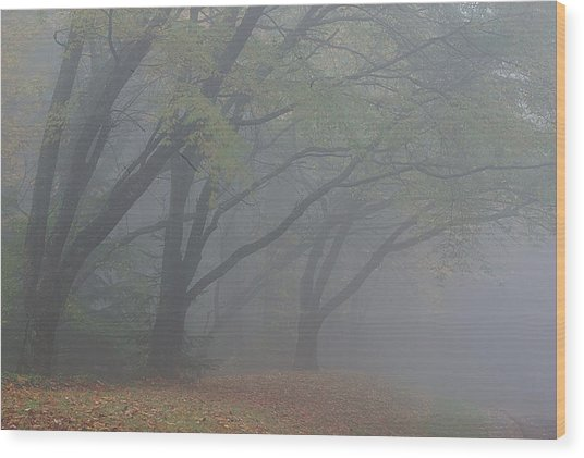 Washington Park Fog 1 Wood Print
