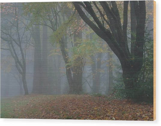 Washington Park Fog 2 Wood Print