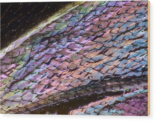 Wasp Wing Wood Print by Science Photo Library