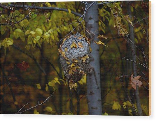 Wasp's Nest Wood Print