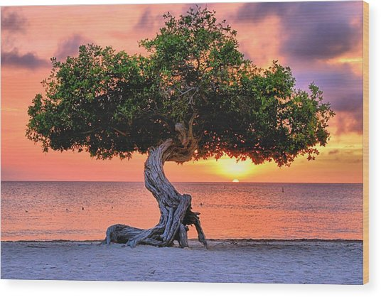 Watapana Tree - Aruba Wood Print