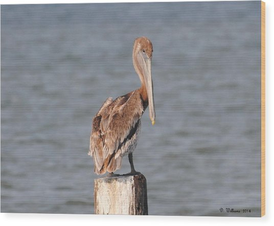 Watchful Pelican Wood Print