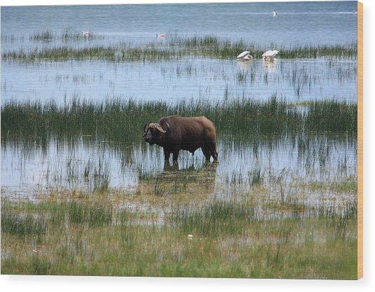 Water Buffalo At Lake Nakuru Wood Print