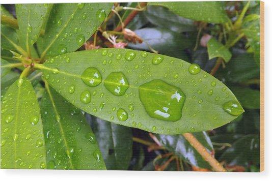 Water Droplets On Leaf Wood Print