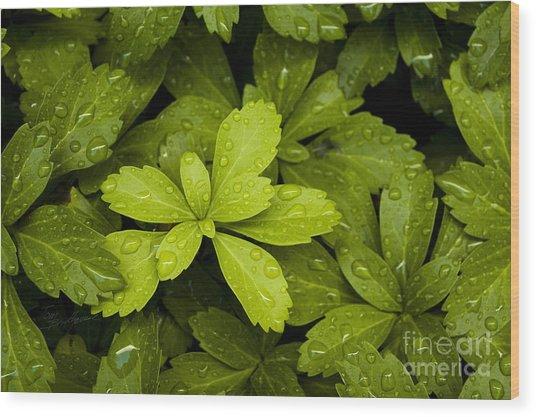 Water Drops New Growth Wood Print
