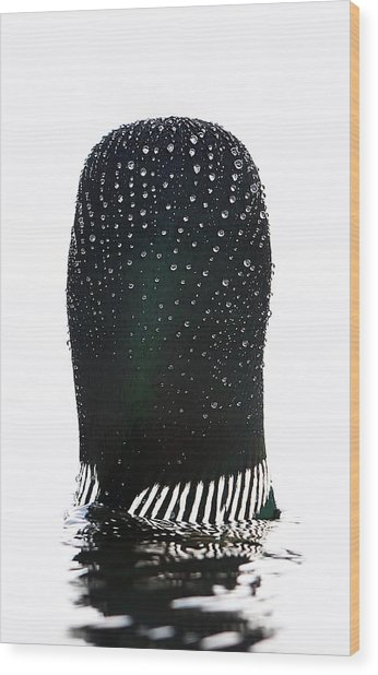 Water Drops On A Loon Wood Print by Jim Cumming