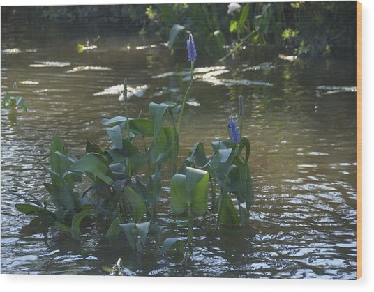 Water Flower Wood Print