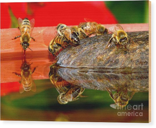 Water For Honey Bees 2 Wood Print