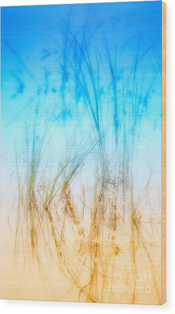 Water Grass - Outer Banks Wood Print by Dan Carmichael
