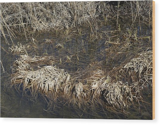 Dried Grass In The Water Wood Print