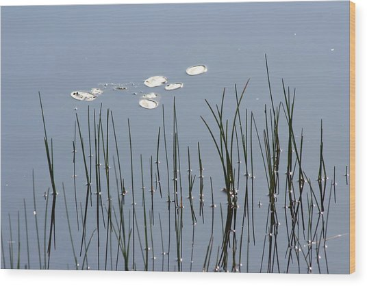 Water Lilies Wood Print by Carolyn Reinhart