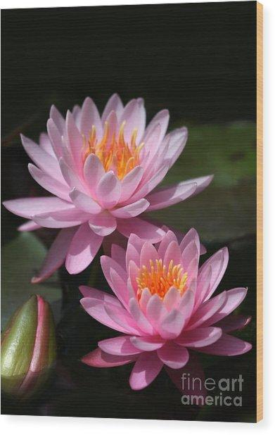 Water Lilies Love The Sun Wood Print