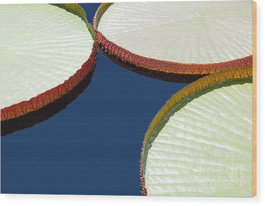 Water Lilly Platters Wood Print