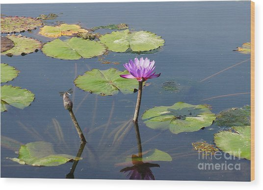 Water Lily And Dragon Fly One Wood Print