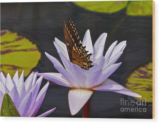 Water Lily And Swallowtail Butterfly Wood Print