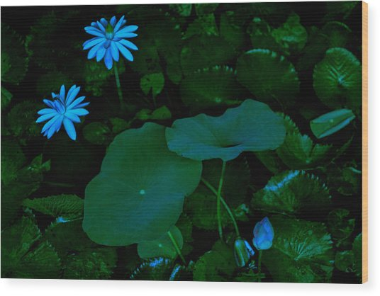 Water Lily Wood Print by Donald Chen